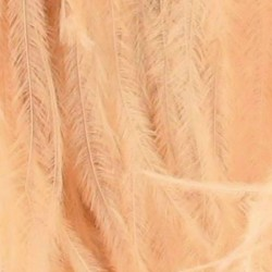OSTRICH FEATHERS FRINGES 3PLY CC CHAMPAGNE