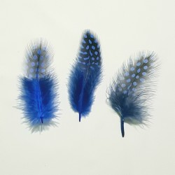 FEATHERS 04